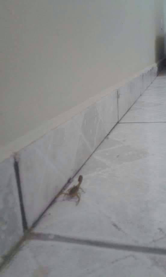Prefeitura vai fazer vistoria e orientar moradores do Parque dos Sinos sobre escorpiões