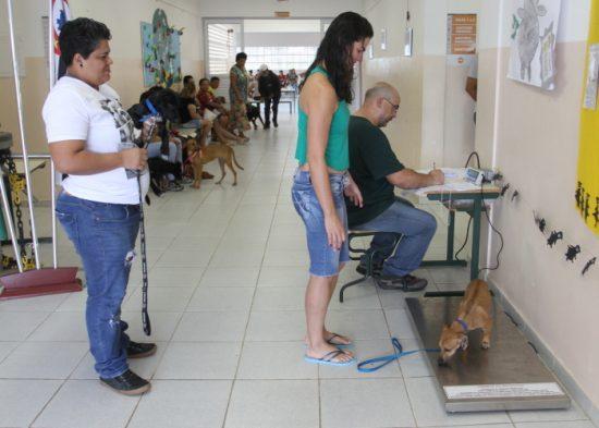 Jacareí realiza mutirão de castração de cães e gatos neste fim de semana