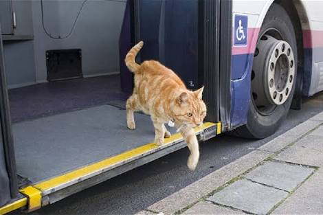 Prefeitura autoriza transporte de cães e gatos nos ônibus de Jacareí