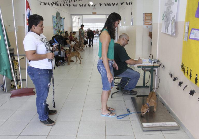 Cães e gatos passarão por castração no fim de semana