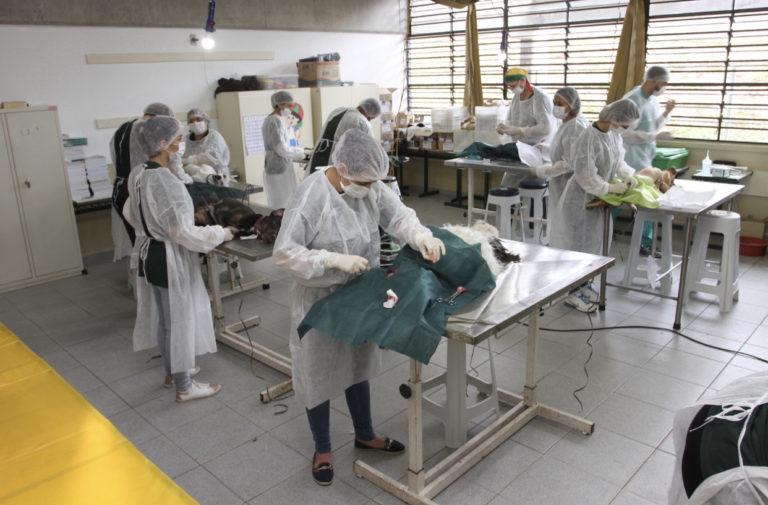 Castração atende 519 animais em mutirão no fim de semana