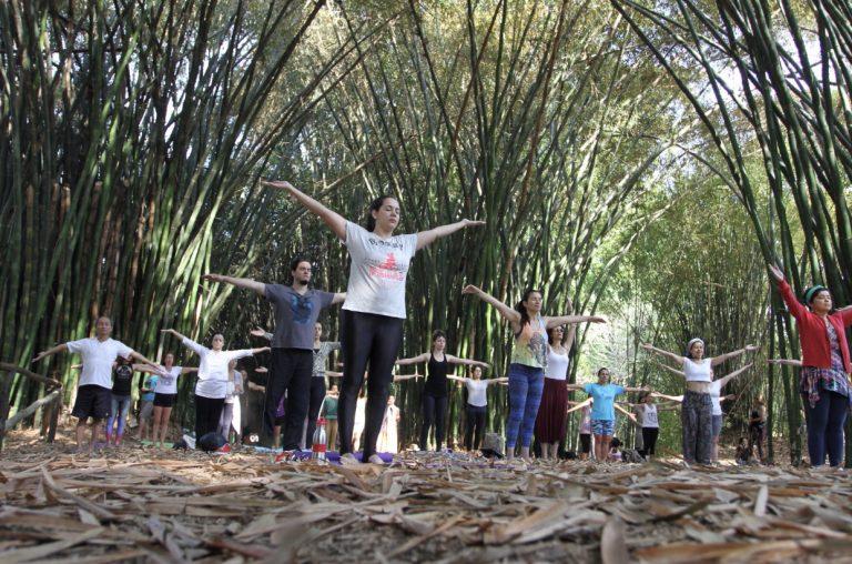 Yoga será atração neste domingo no Viveiro Municipal