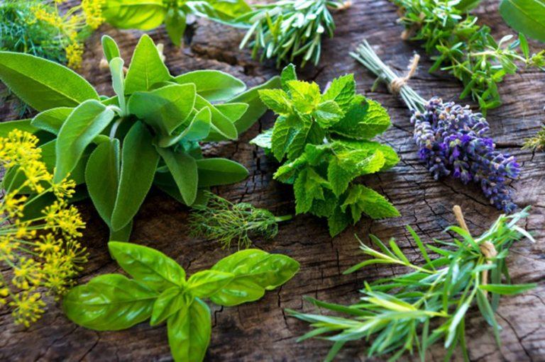 Engenheiro ambiental ensina a cultivar plantas medicinais