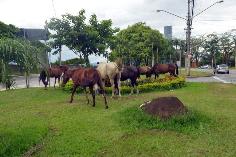 Serviço de apreensão já capturou 78 animais de grande porte em São José