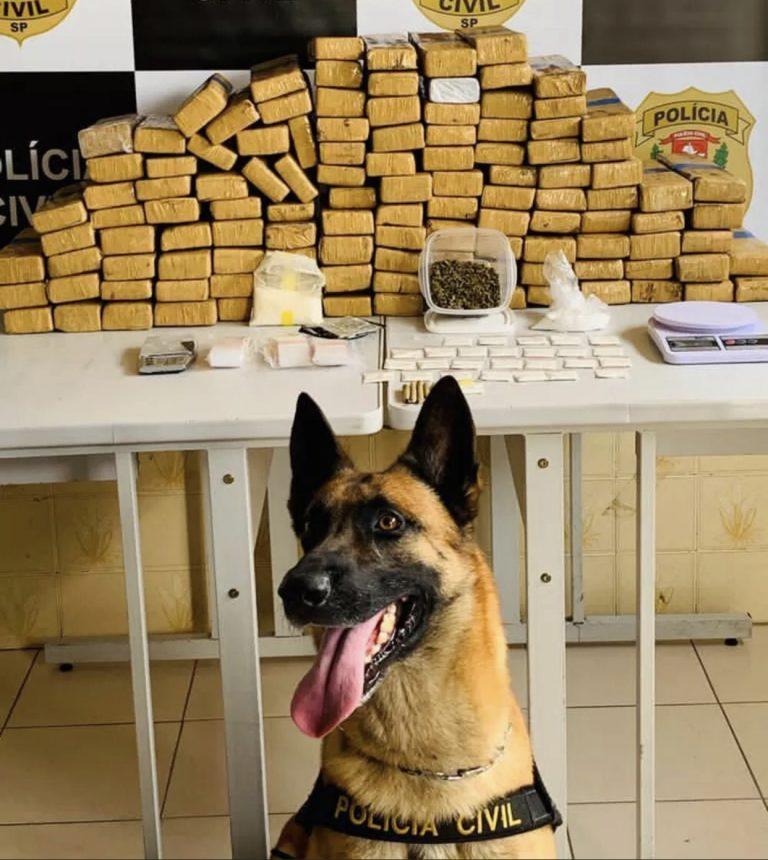 Com ajuda de cão farejador, Polícia Civil apreende 82 kg de maconha em Jacareí