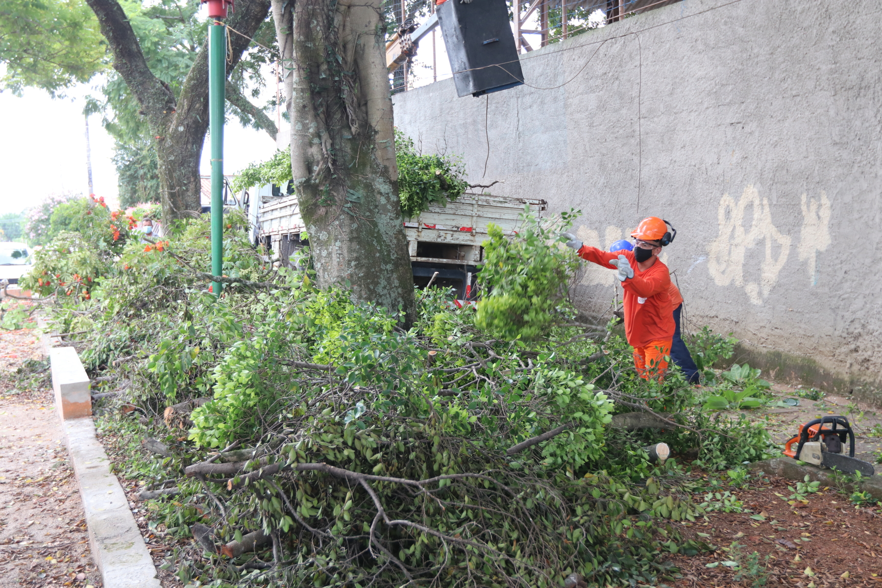Secretaria de Meio Ambiente tem canais abertos com população para pedidos de poda de árvores