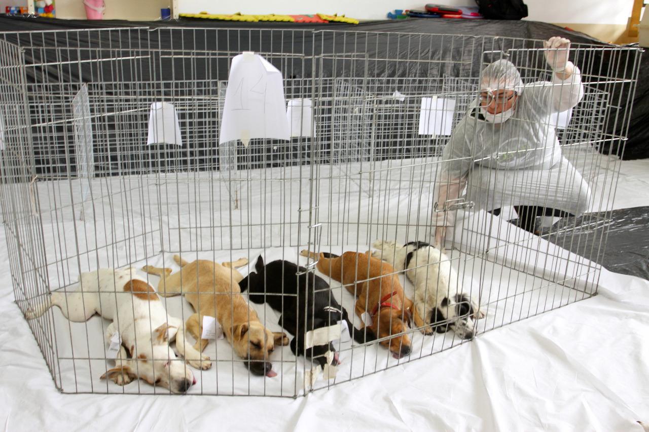 Mais um mutirão de Castração de Cães e Gatos tem 100% de adesão