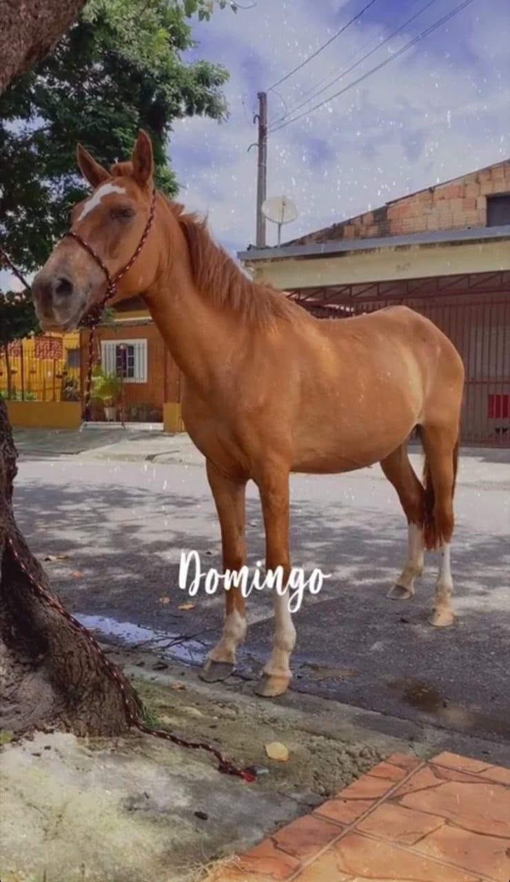 Família procura égua desaparecida em Jacareí