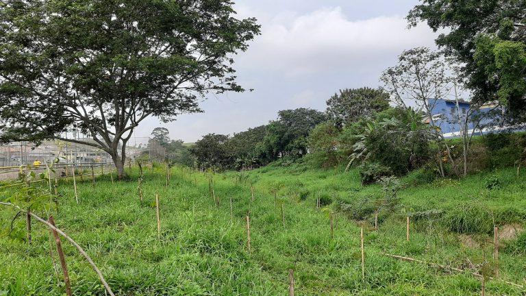 Ação resulta em 3.172 mudas de árvores plantadas em Jacareí
